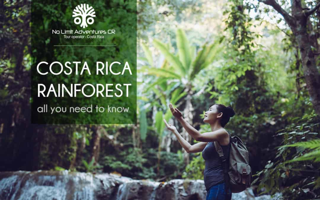 The mysterious Costa Rica rainforest, all you need to know