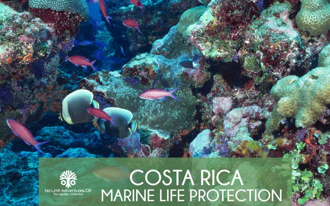 Costa Rica Marine Life protection