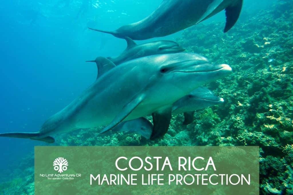 Dolphins Costa Rica marine life