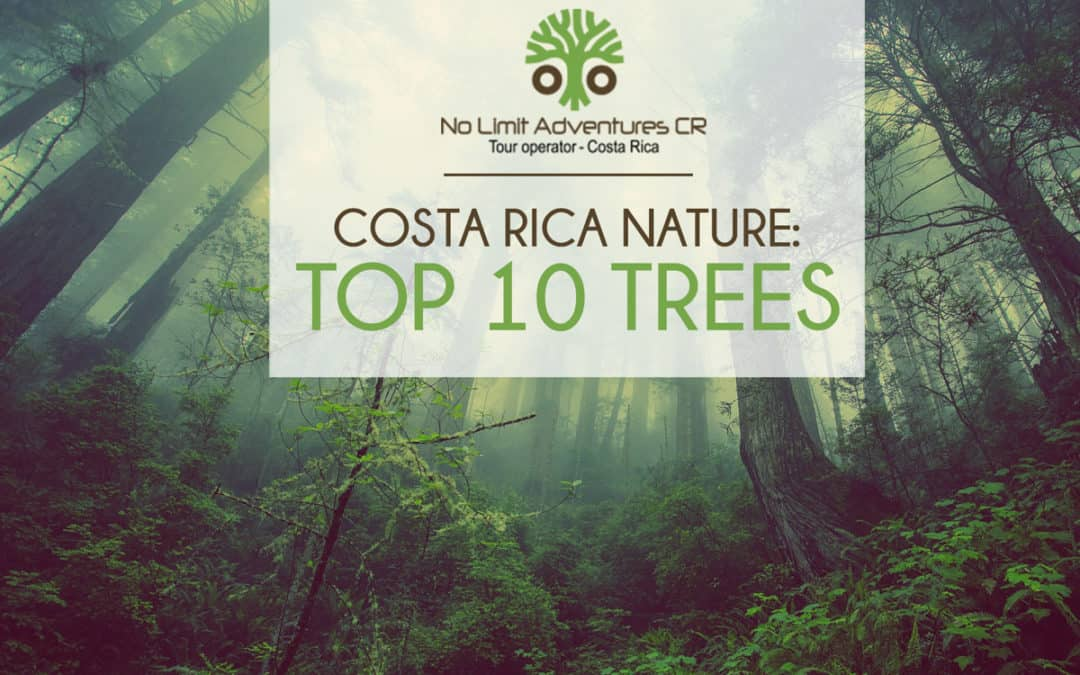 Costa Rica Nature: Top 10 Trees