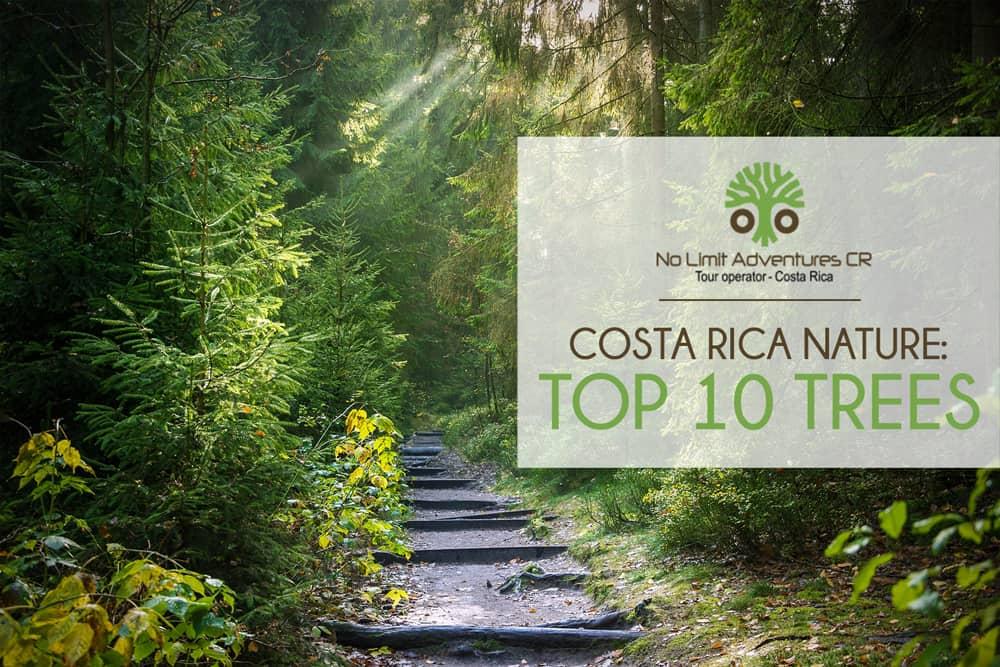 costa rica nature top 10 trees