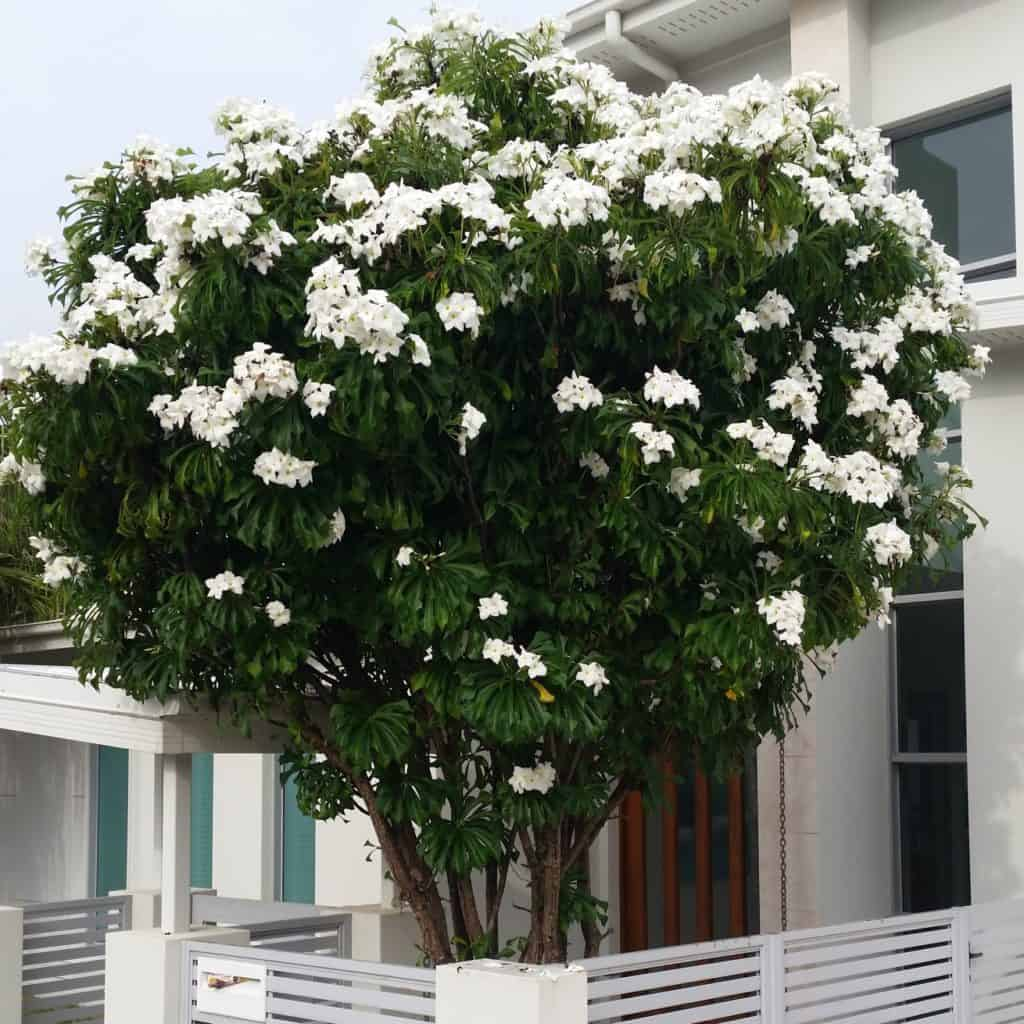 Garden Centre: Costa Rica Nature: Top 10 Trees