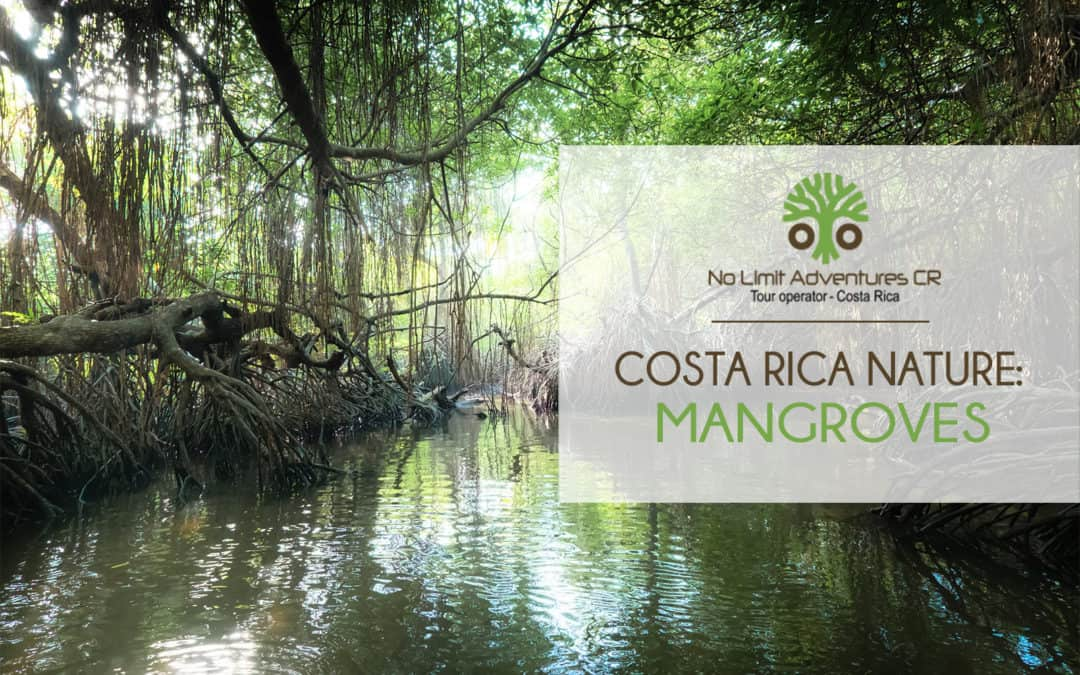 COSTA RICA NATURE MANGROVES